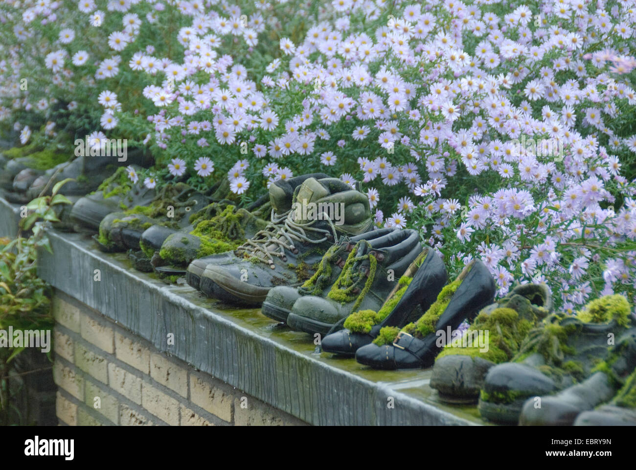 mossy garden shoes on a wall in garden - Stock Image