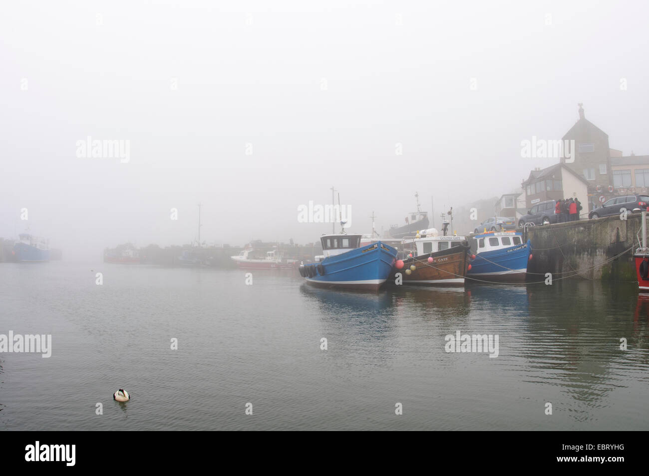 Seahouses harbour on a foggy morning with a lone male eider (Somateria mollisima) in the foreground. Seahouses, - Stock Image