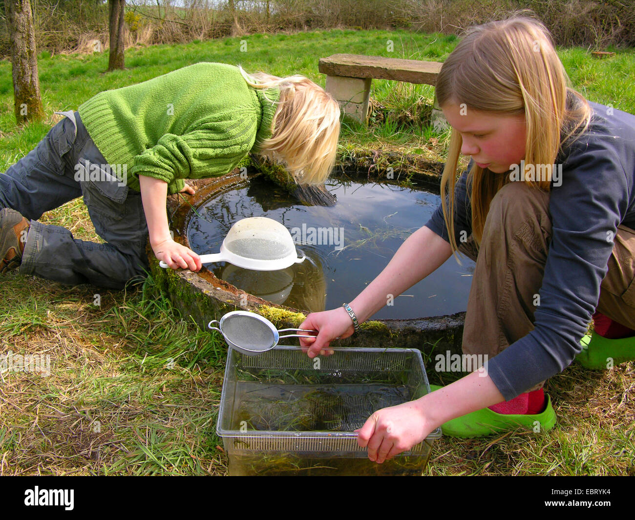 children catching water animals with cullenders in a garden pond, Germany - Stock Image