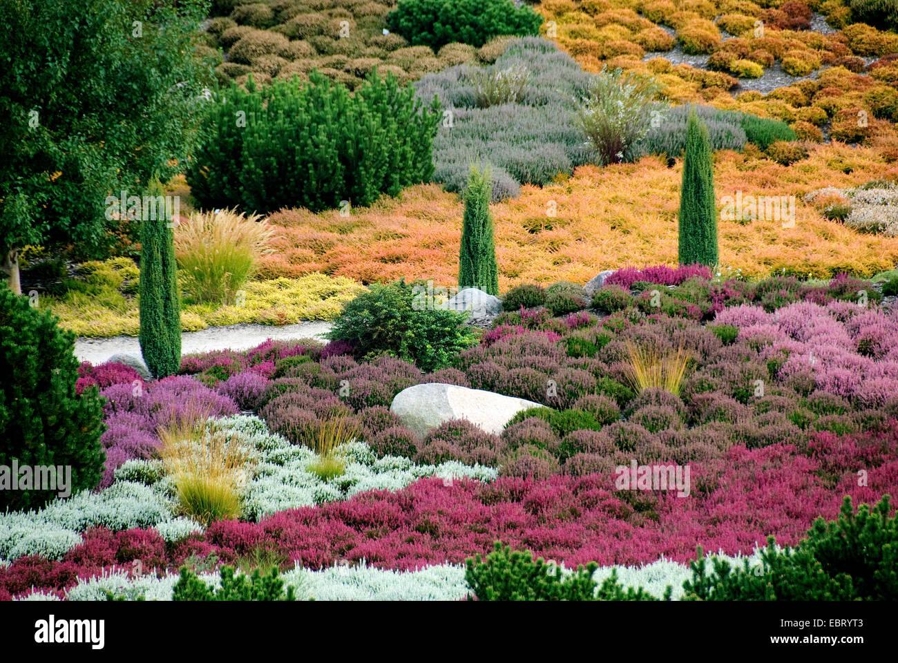 heather, ling (Calluna vulgaris), heath garden, Germany, Findlingspark Nochten - Stock Image