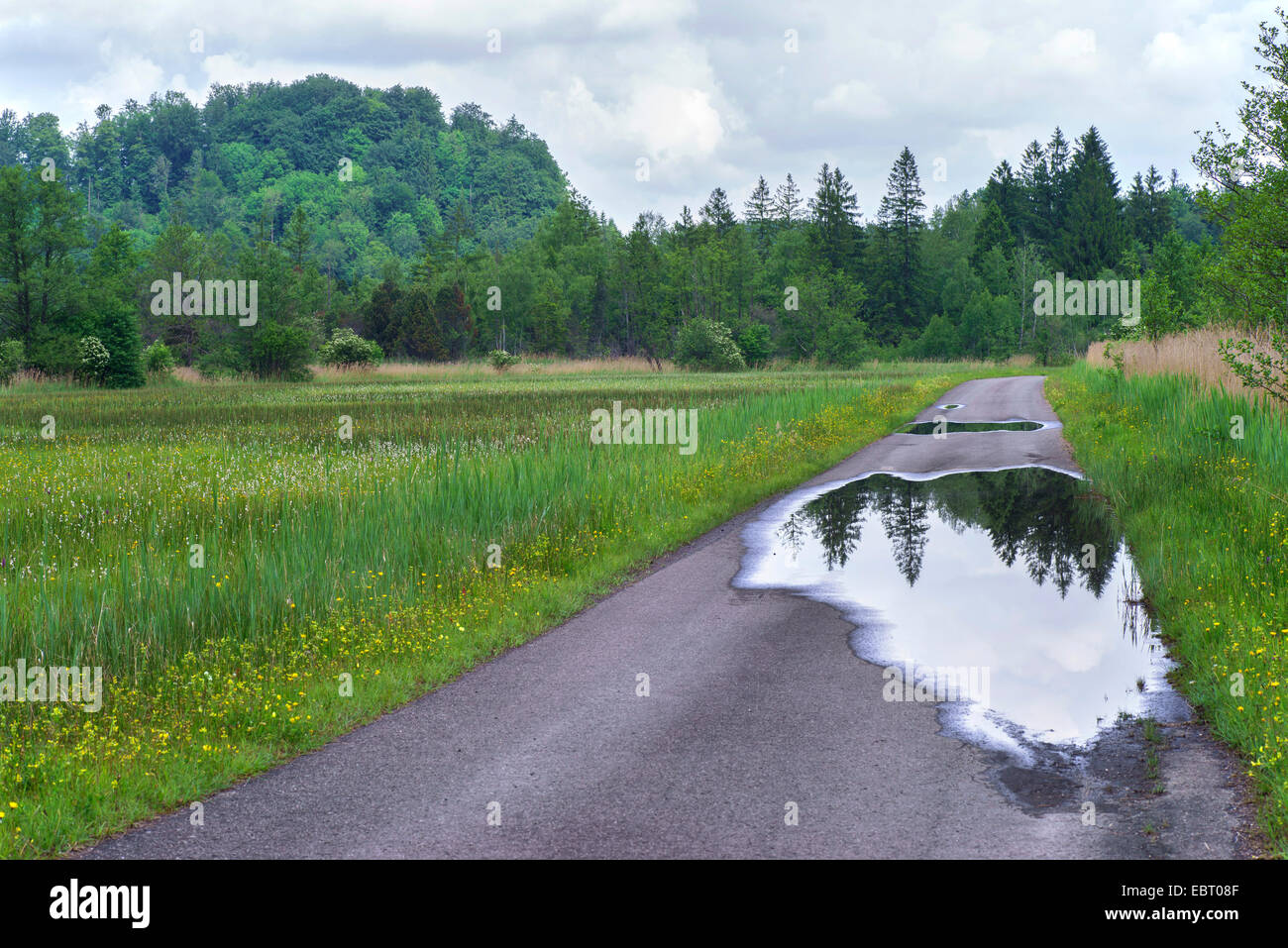 sealed road with puddles in wetlands, Germany, Bavaria, Oberbayern, Upper Bavaria, Murnauer Moos - Stock Image