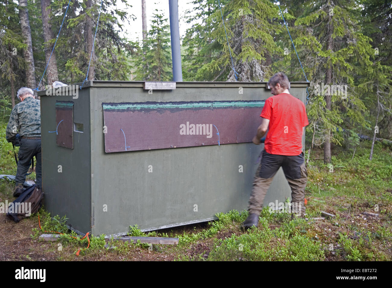 bear guide securing photo-hide to exclude bears, Finland, Martinselkonen Wilds Centre - Stock Image