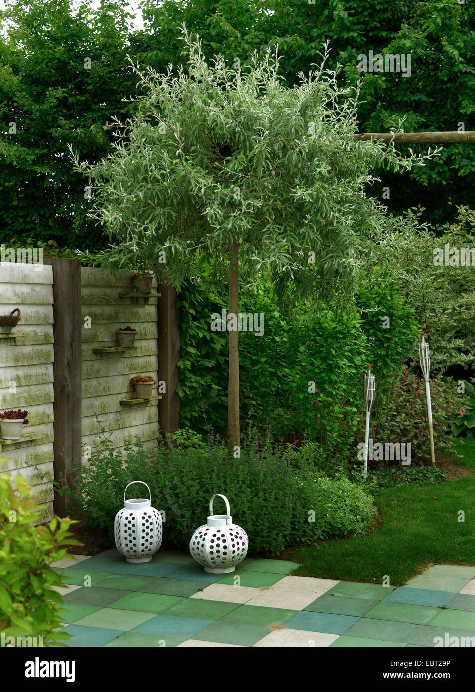 Fence Bushes Trees