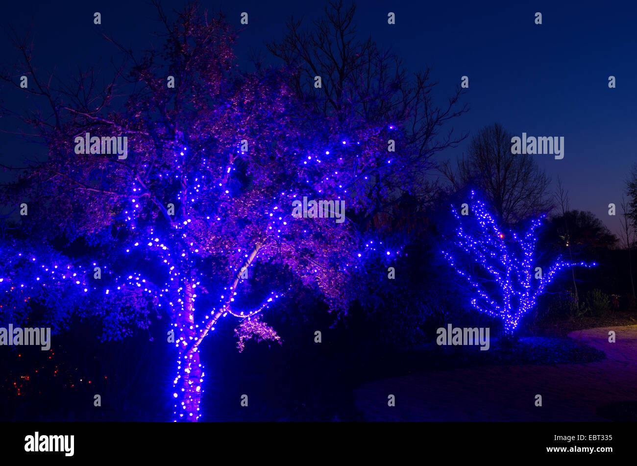 Outdoor christmas trees have been decorated with blue lights and outdoor christmas trees have been decorated with blue lights and shot against a brilliant blue sky aloadofball Image collections