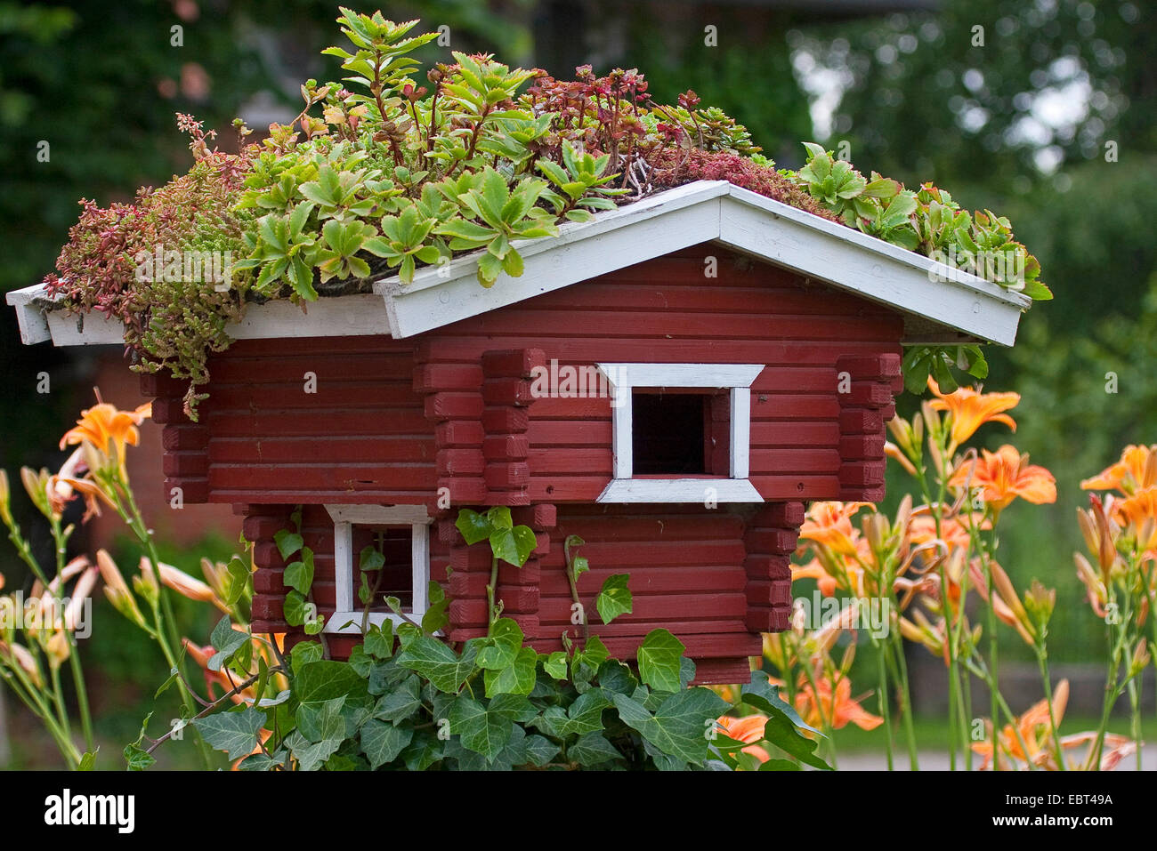 decorative birdhouse with the roof planted with succulents, Germany - Stock Image
