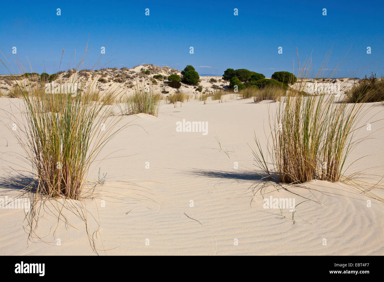 dunes in the National Park, Spain, Andalusia, Coto De Donana National Park Stock Photo
