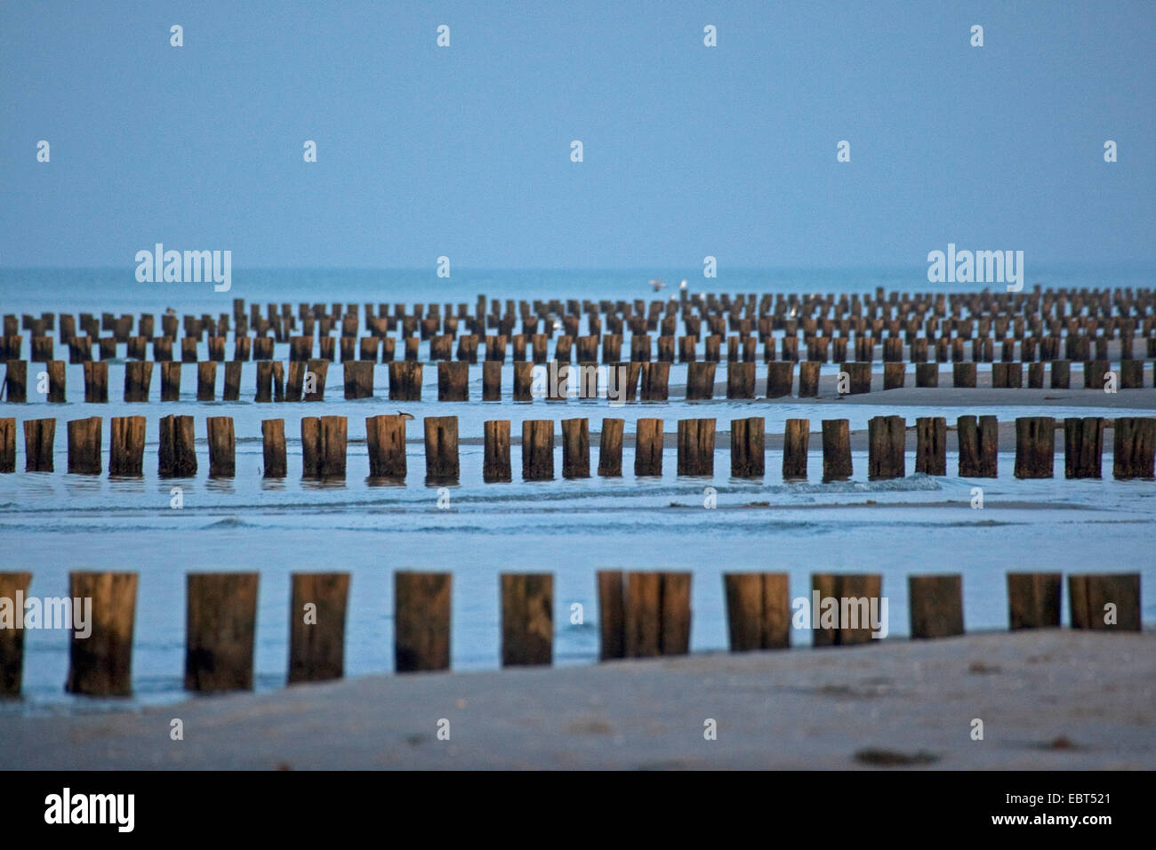spur dikes at the Baltic Sea, Germany, Mecklenburg-Western Pomerania, Zingst - Stock Image