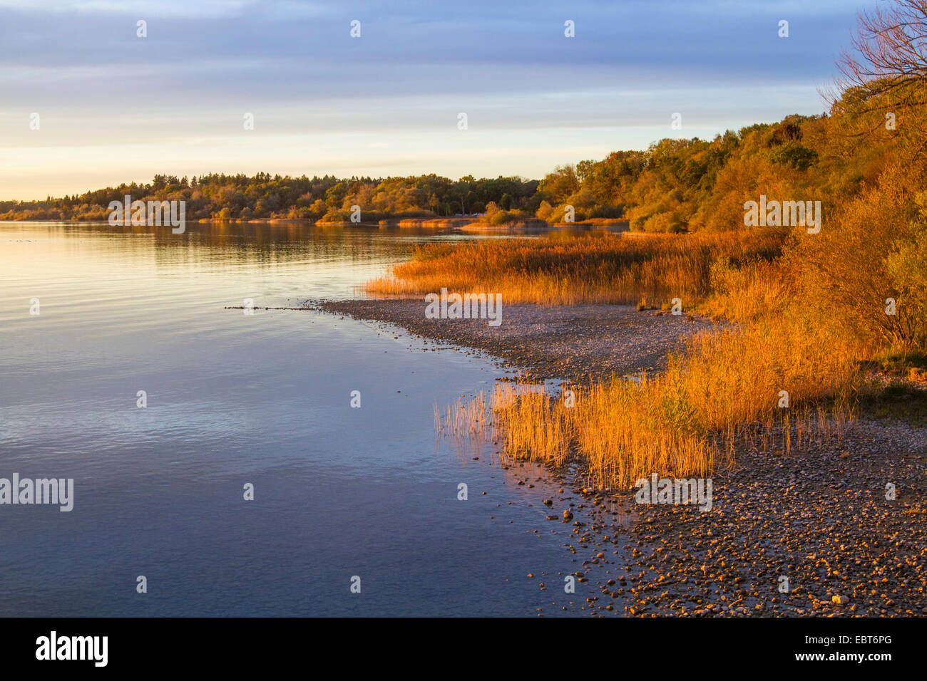 lake with reed bank in evening light, Germany, Bavaria, Lake Chiemsee, Chieming - Stock Image