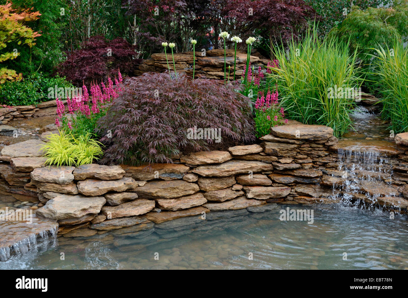 The pond area in a reflective aquatic garden with planted rockery ...