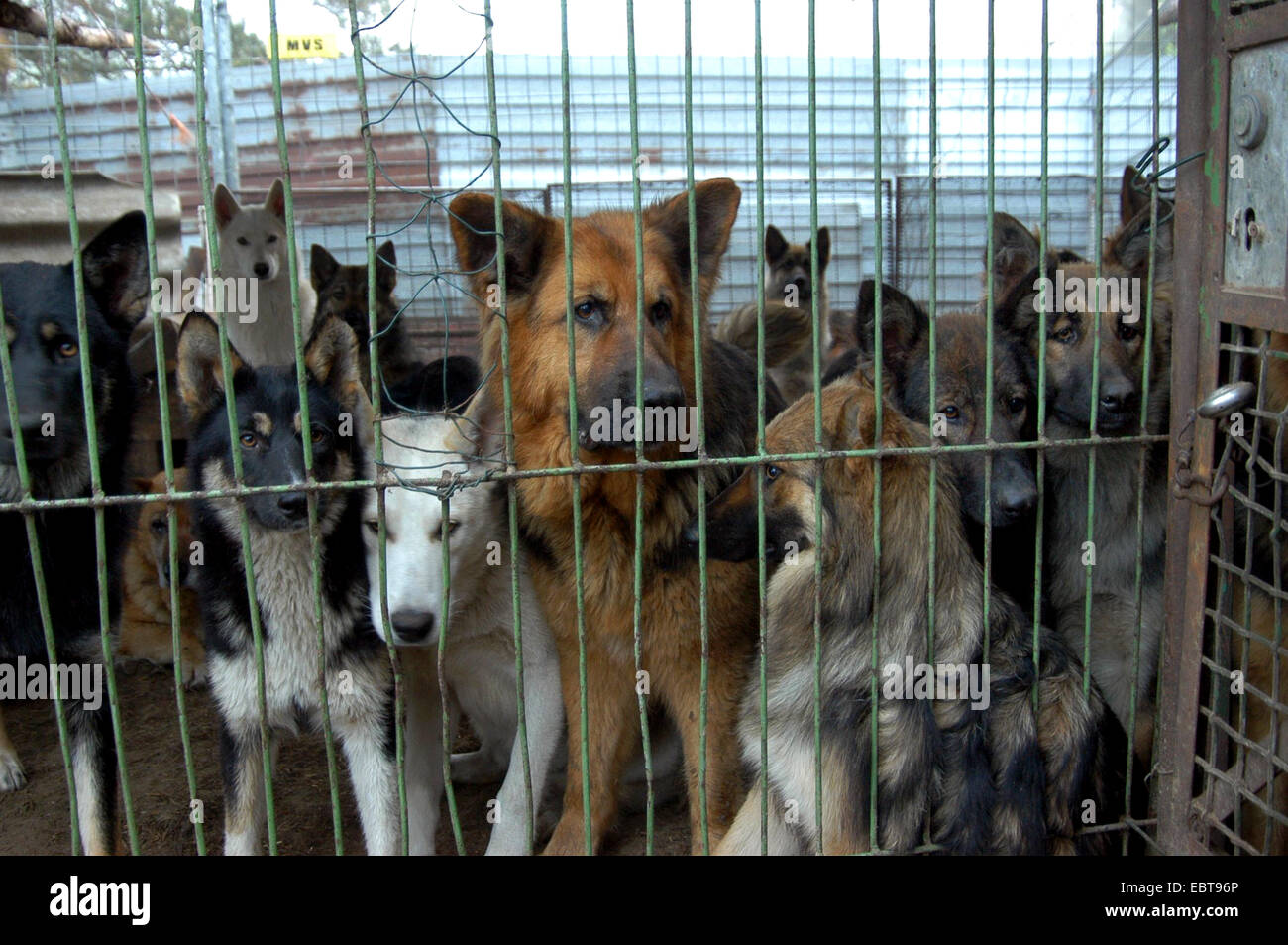 , several dogs in a kennel, Germany, - Stock Image