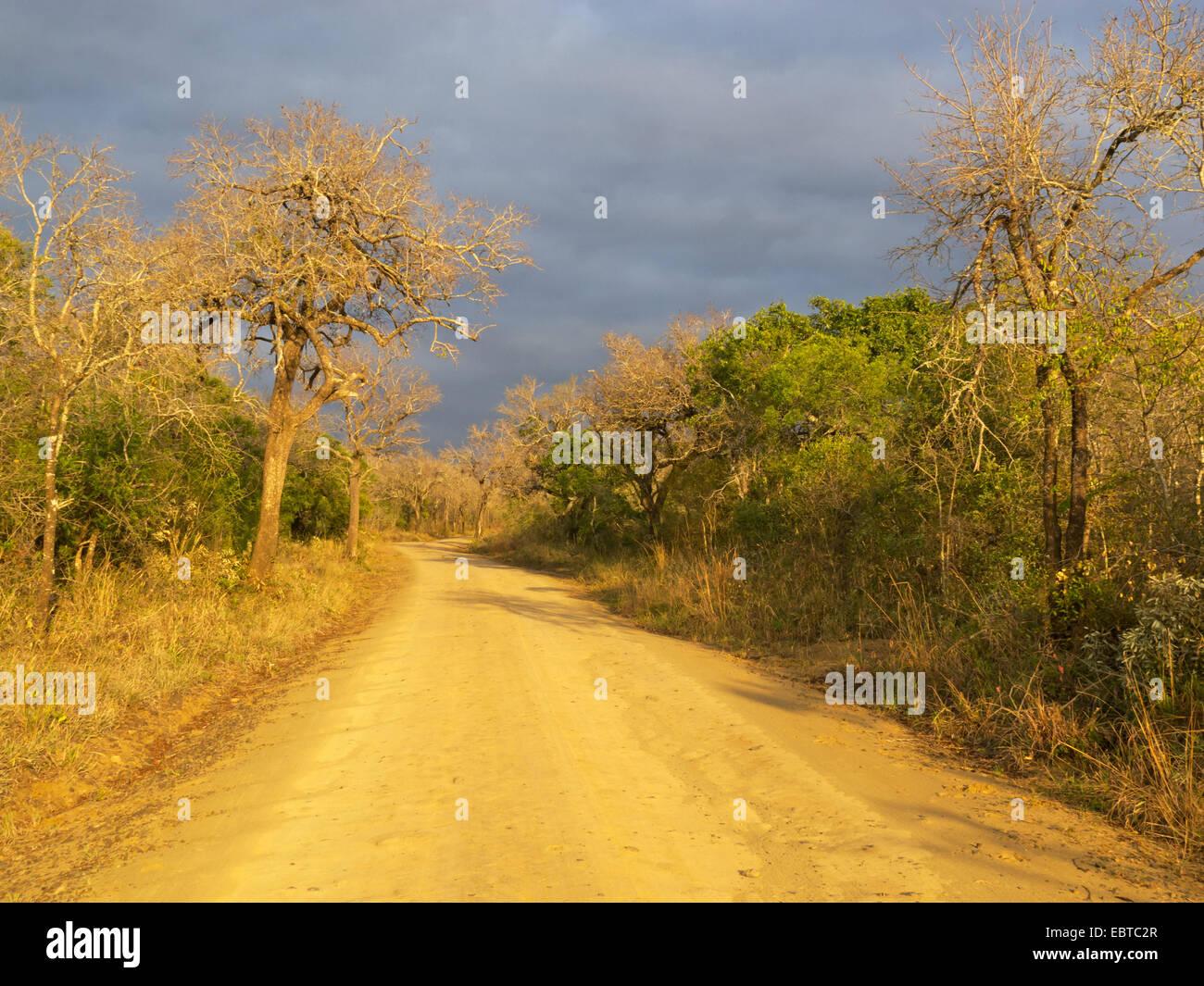 unpaved road in savanna, South Africa, Hluhluwe-Umfolozi National Park, Hilltop Camp - Stock Image