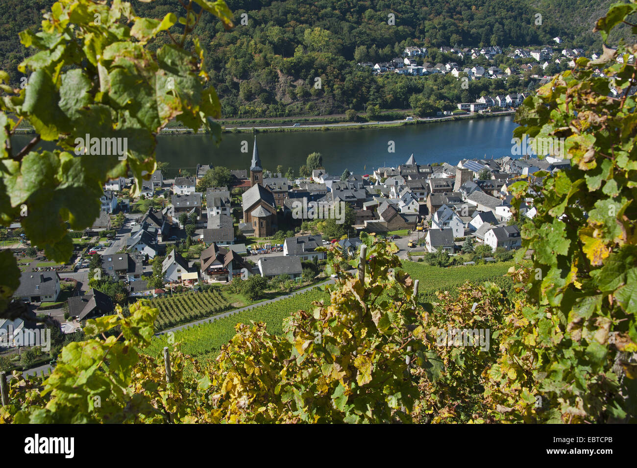 idyllic view from a vineyard on the towns Alken and Kattenes at the Mosselle, Germany, Rhineland-Palatinate - Stock Image