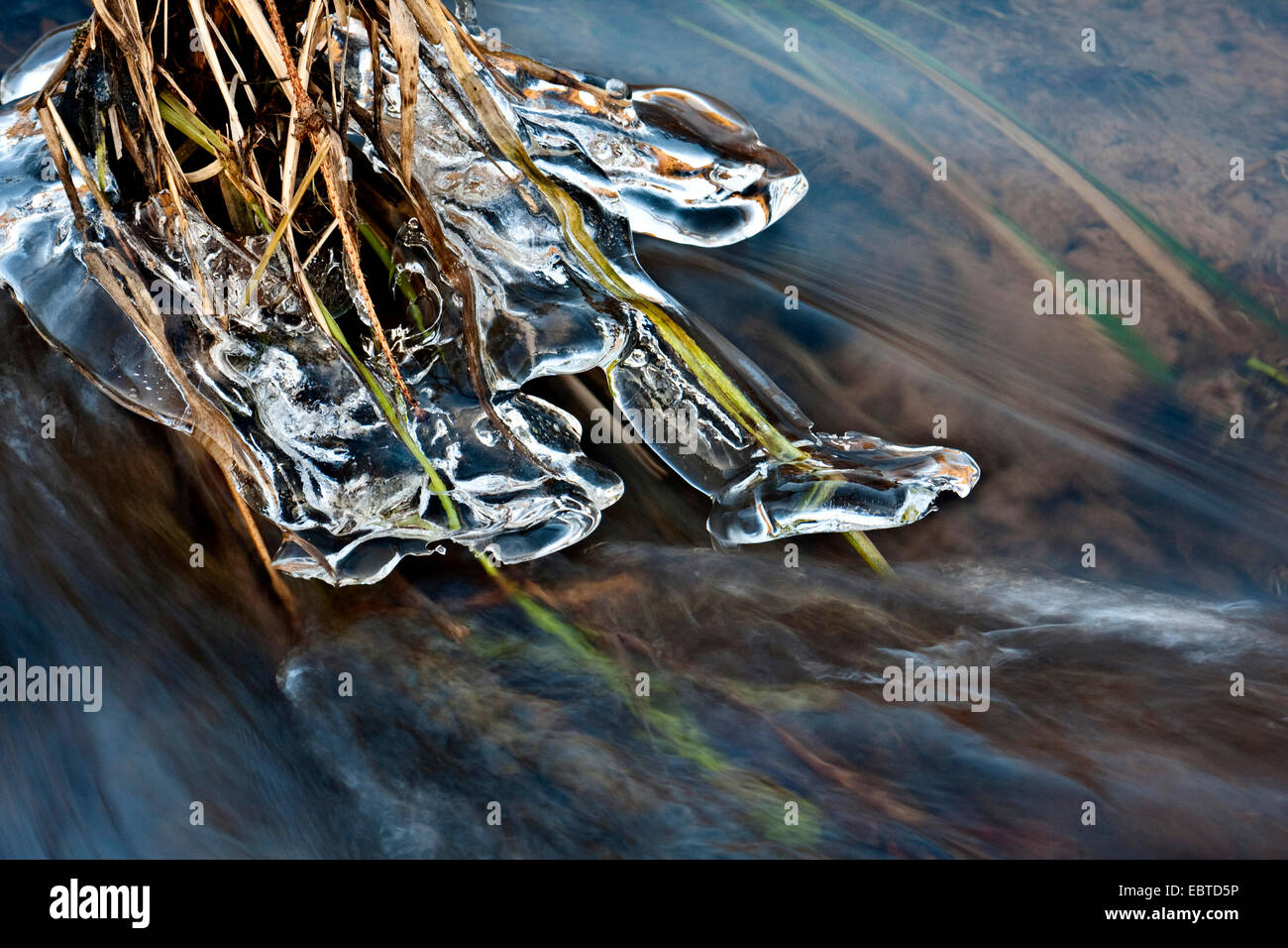 ice at grasses in a creek, Germany, Gewaesser - Stock Image