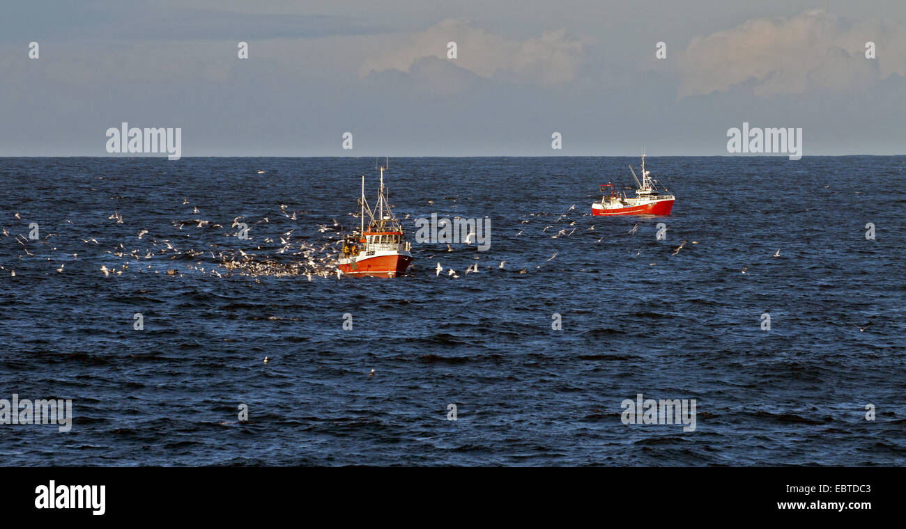 two fishing boats on the North Sea accompanied by  seagulls, Norway, Vest-Agder, Lista, Farsund - Stock Image