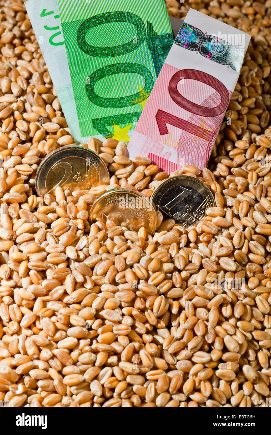 Grains of wheat, yields for crops in agriculture Stock Photo