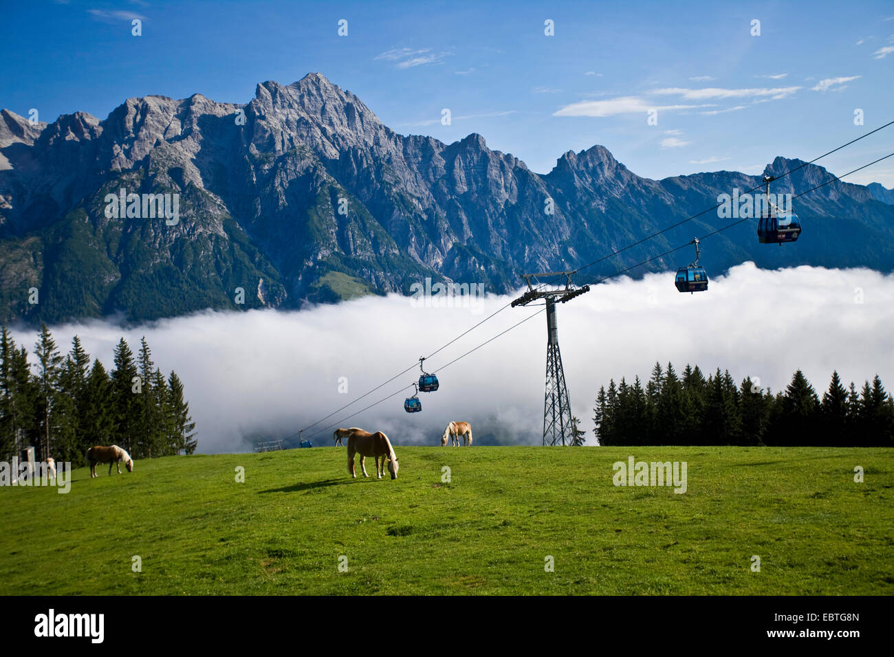 alpine pasture in the sunshine above a canyon filled with clouds, Austria, Salzburg, Salzburgerland, Leogang Stock Photo