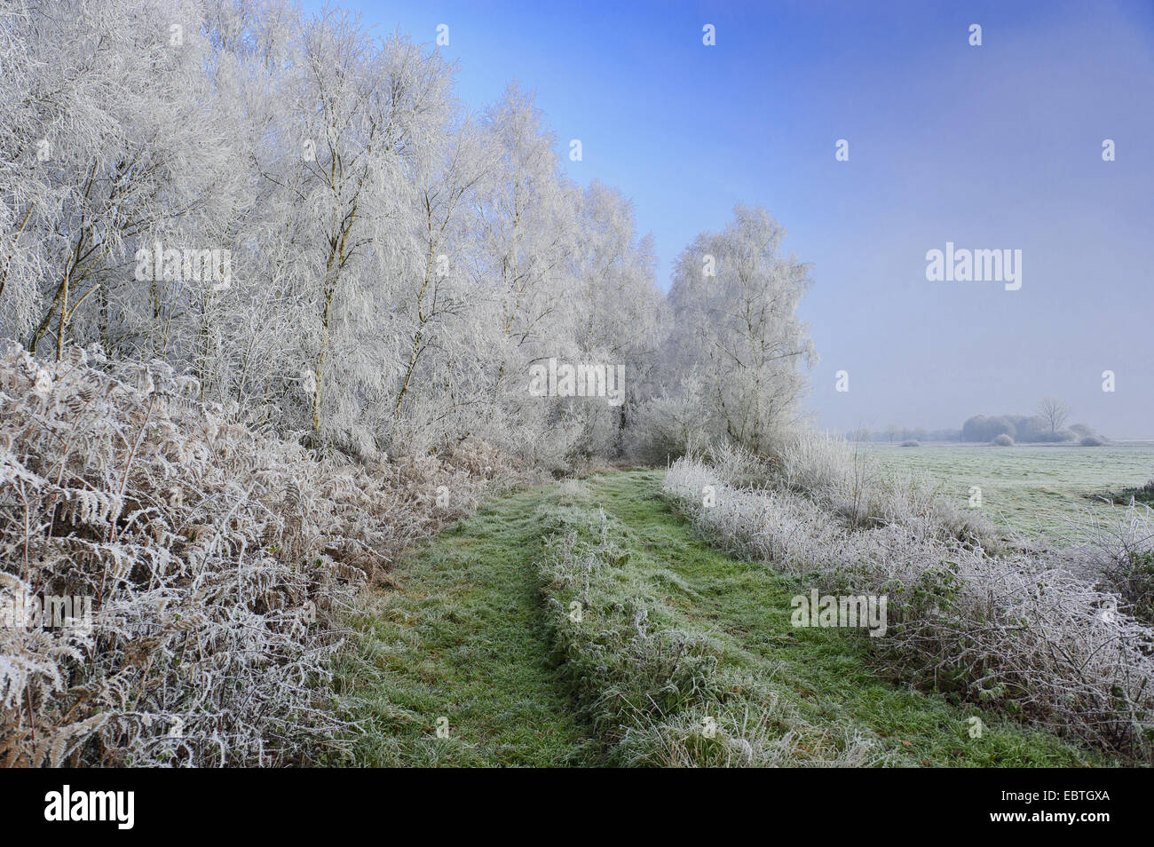 moor landscape in winter, Germany, Lower Saxony, Goldenstedter Moor Stock Photo