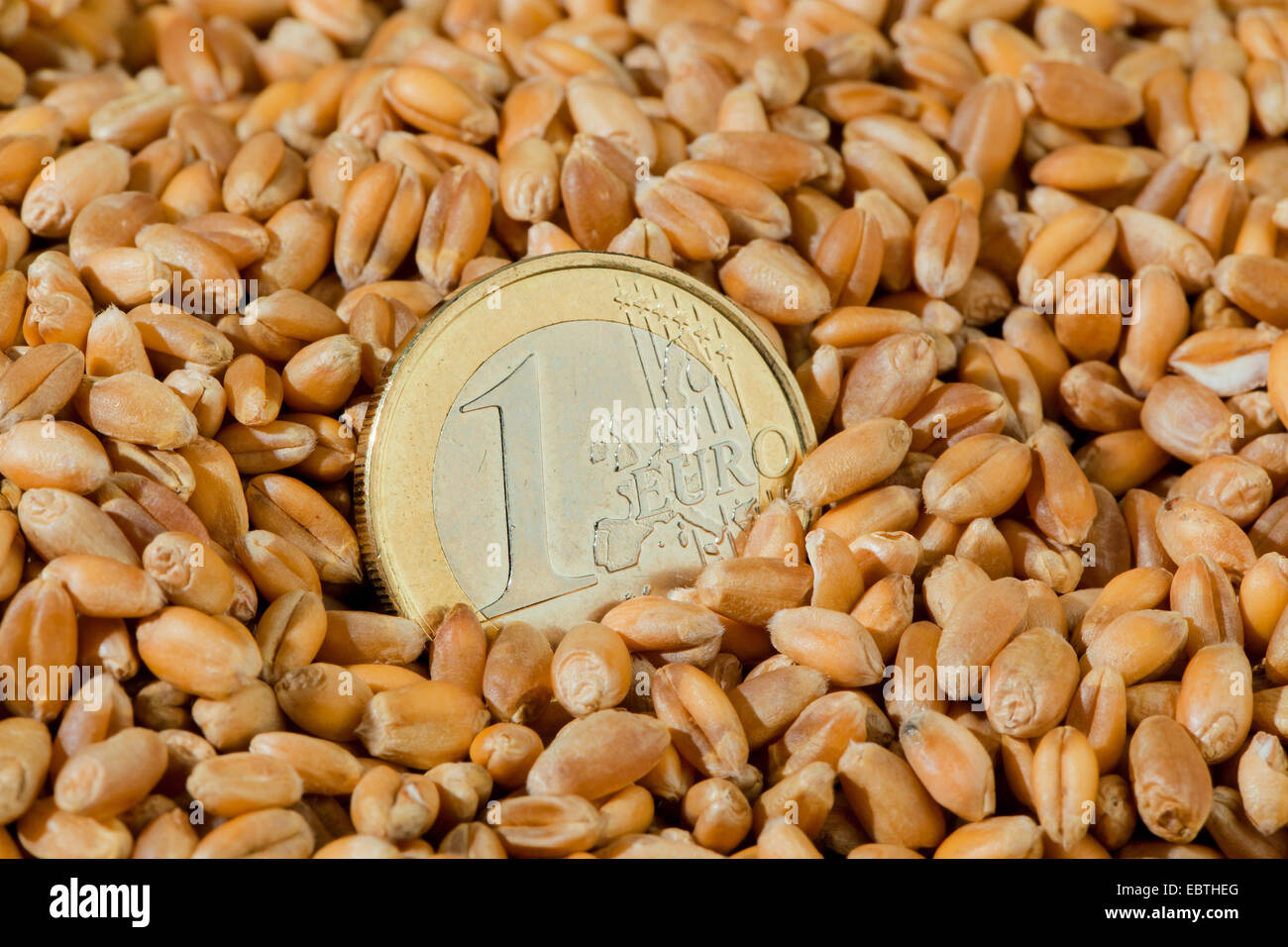 1 Euro coin in wheat grains - Stock Image