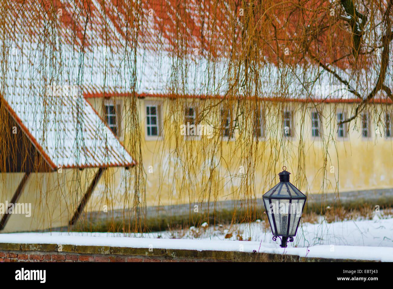 Weeping Willow In Winter Stock Photos & Weeping Willow In Winter ...