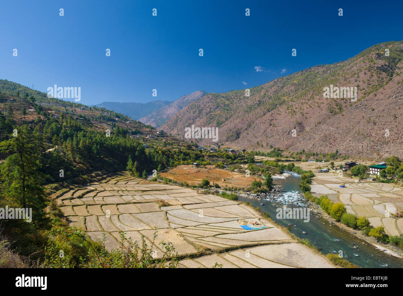 Farmhouse and Terraced Rice Fields and Wang Chu, Thimphu River, Bhutan - Stock Image