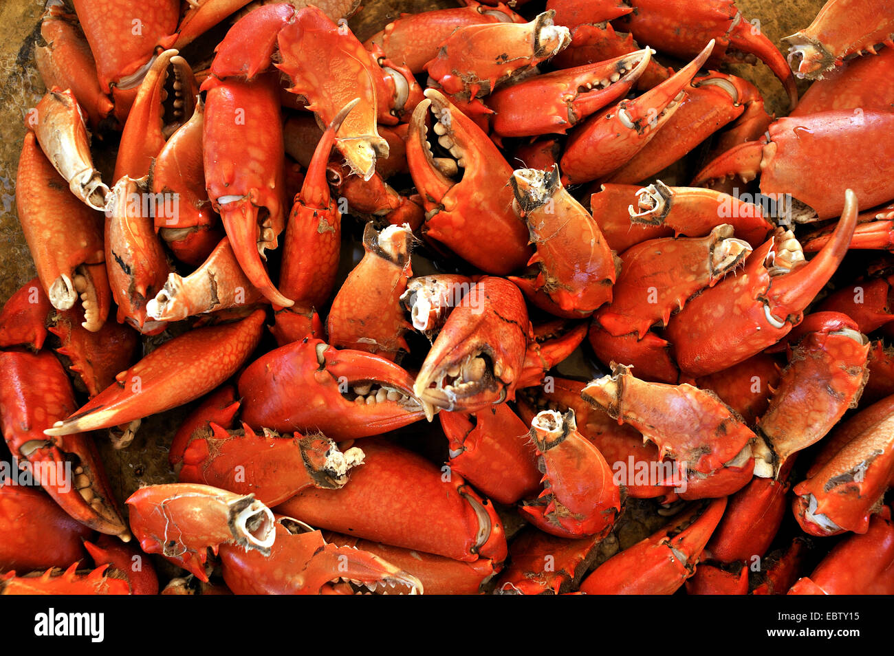 boiled pincers of crabs , Madagascar - Stock Image