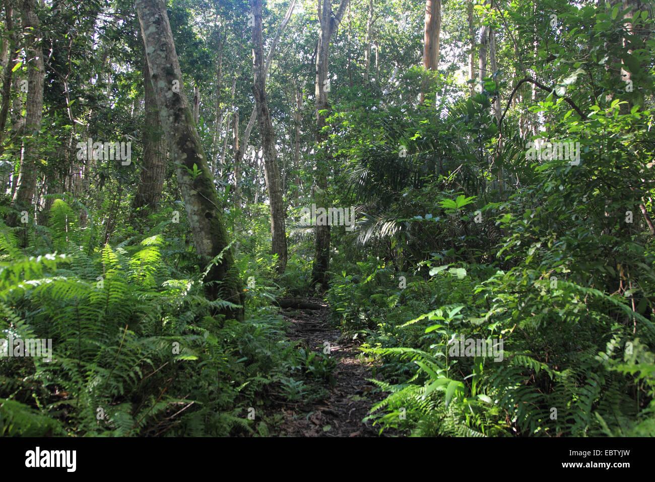 rain rain forest, Tanzania, Sansibar, Jozani National Park - Stock Image