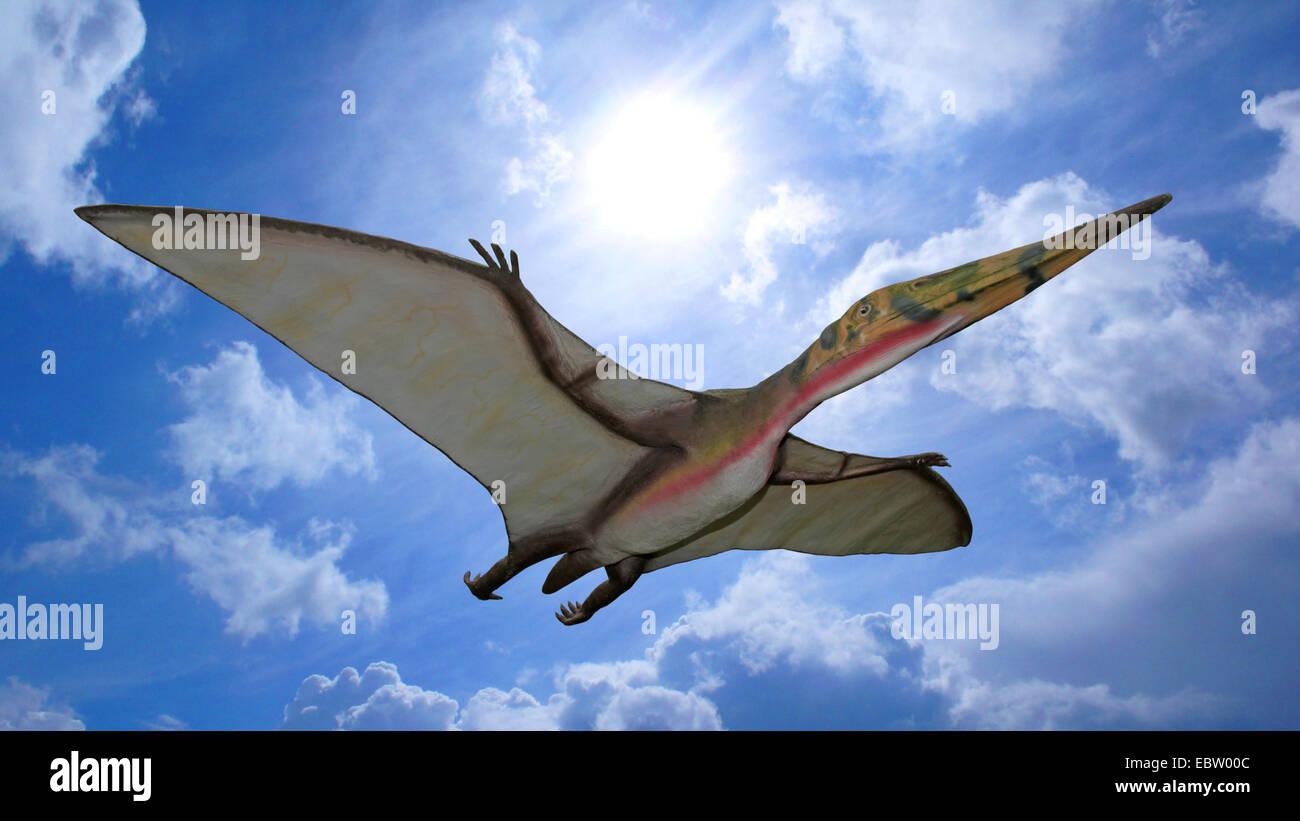 Pterodactylus (Pterodactylus), flying Stock Photo