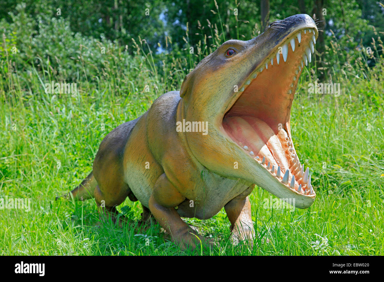 Ambulocetus (Ambulocetus natans), primitive extinct species of walesStock Photo