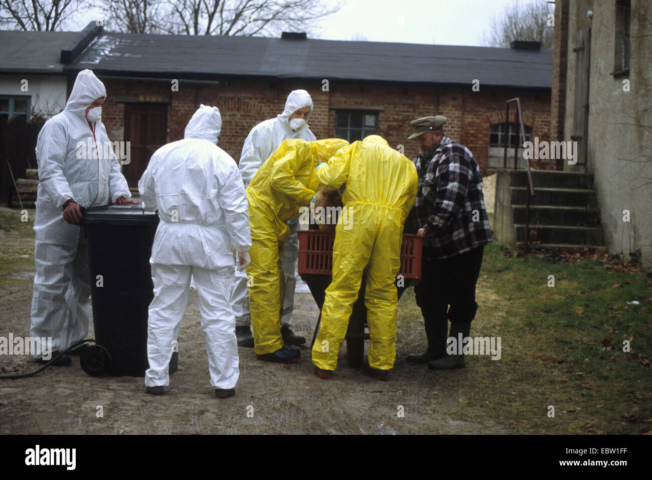 epidemiologists in protective suits together with the poultry farmer of a farm being hit by the bird flu, Germany, - Stock Image
