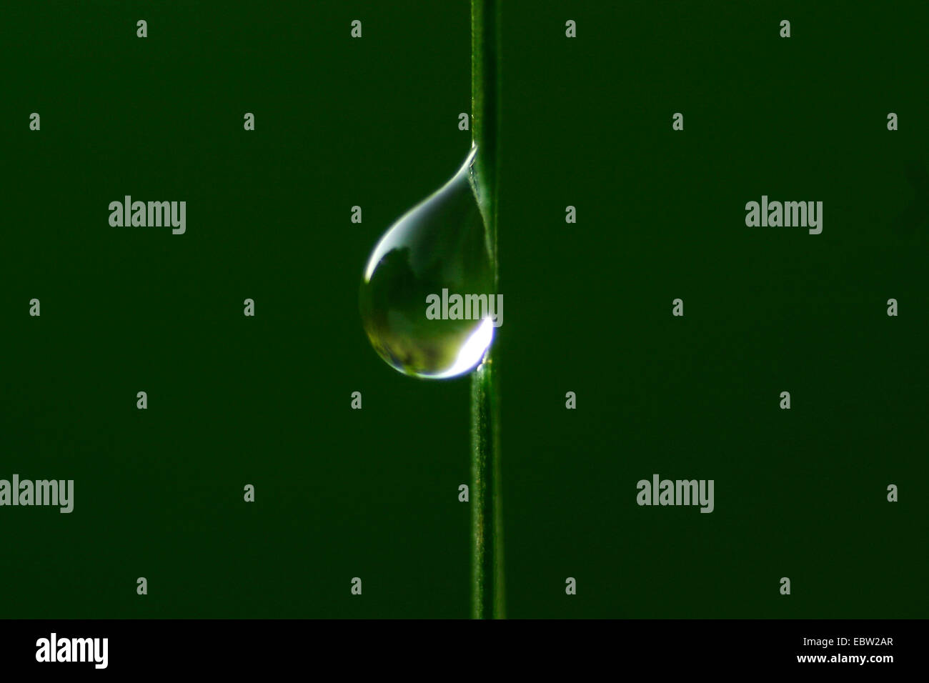 Water drop at a blade of grass - Stock Image