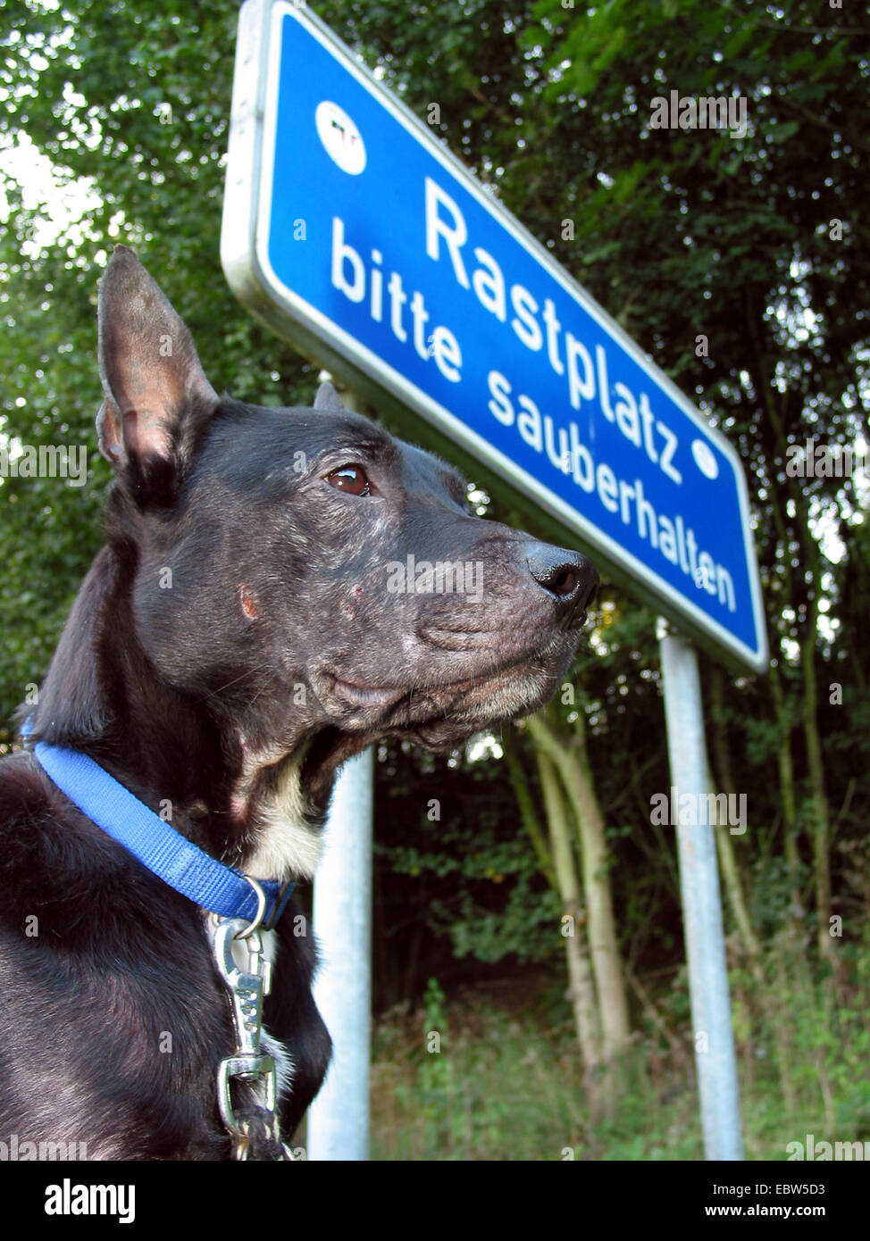 , dog tied up at resting place of a highway, Germany, - Stock Image