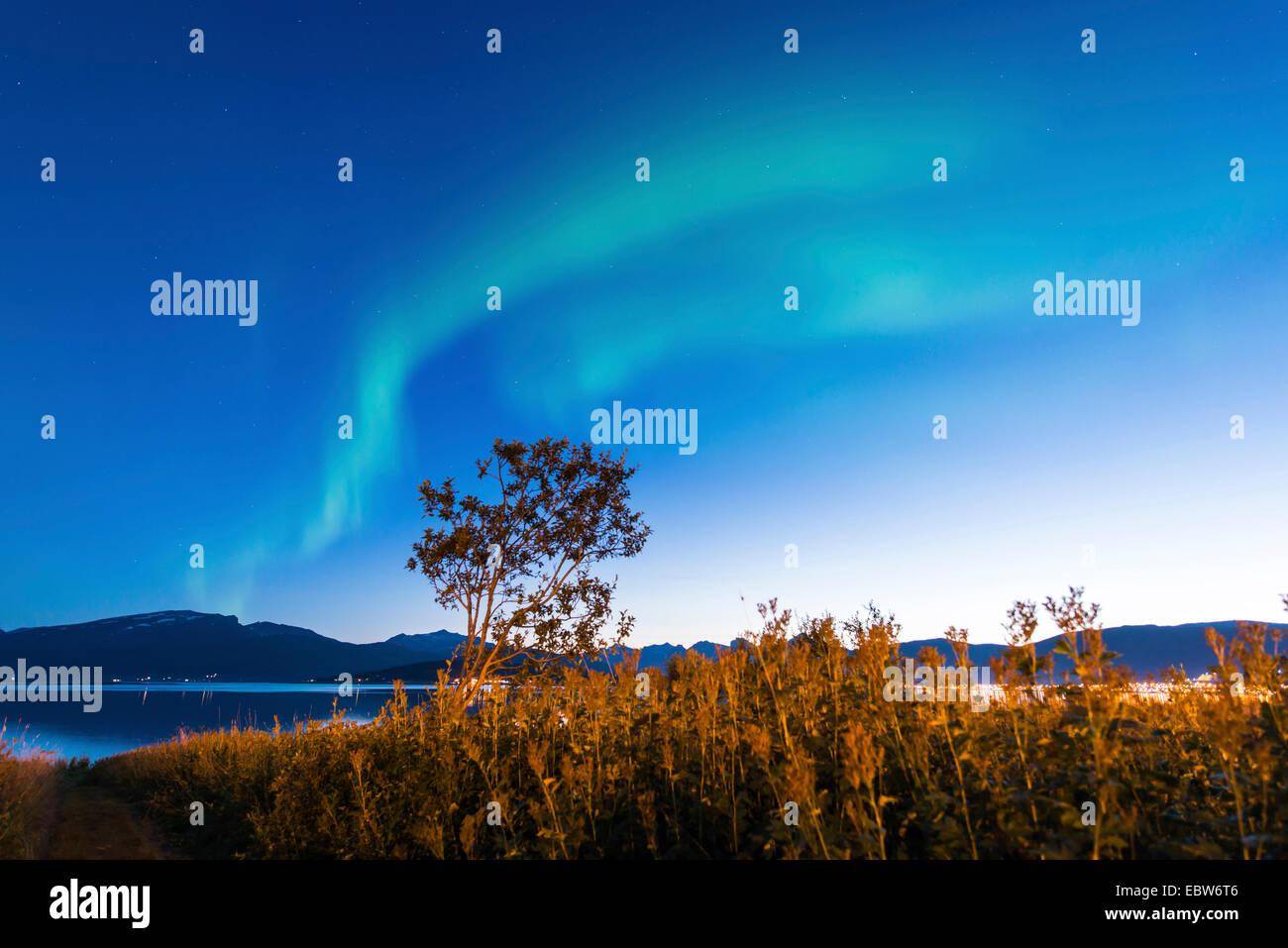 aurora bows over tree, Norway, Troms, Sandnessund, Tromsoe - Stock Image