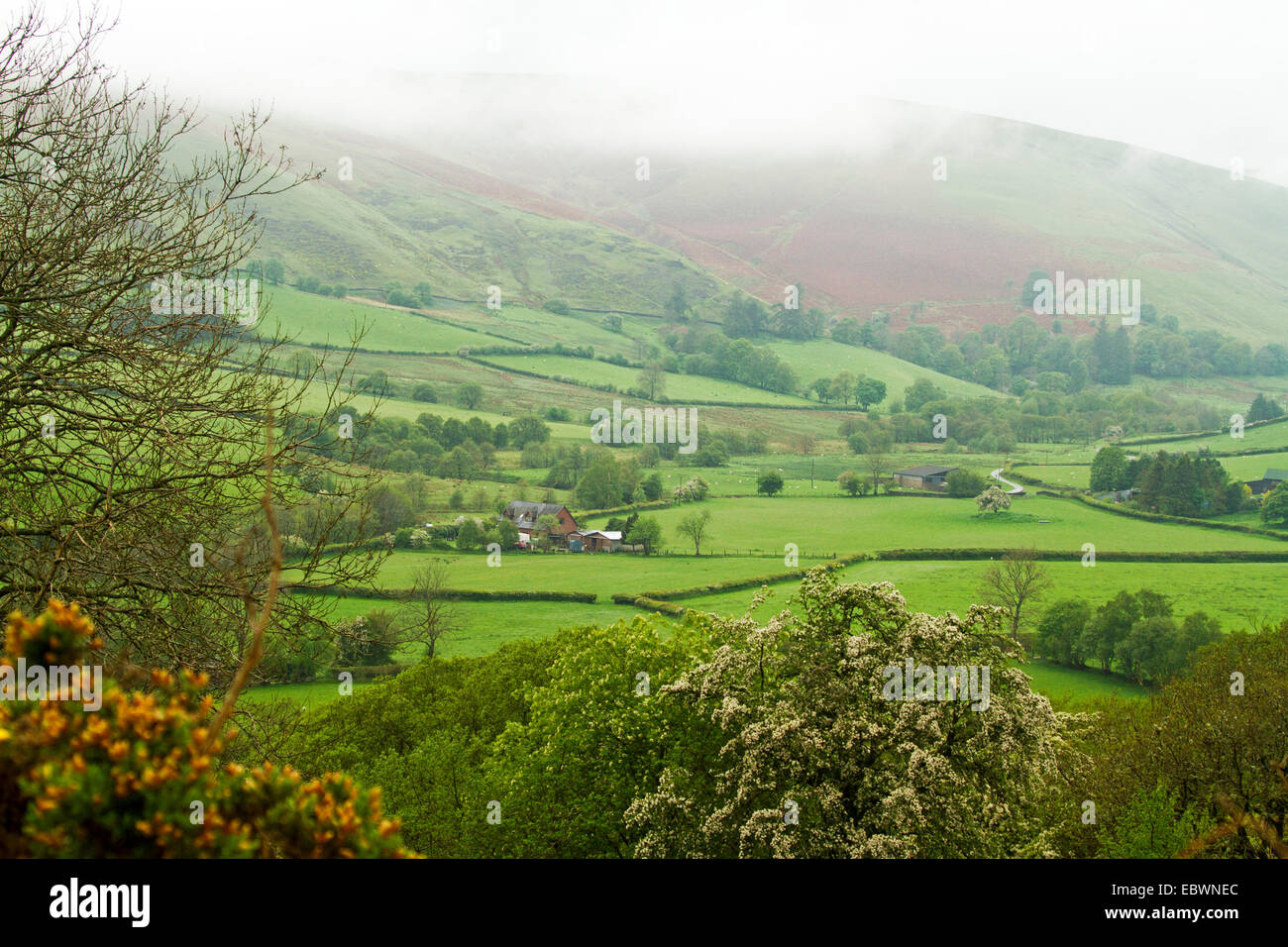 Welsh landscape with mist over hill rising from valley of emerald green fields bordered by hedgerows and clusters - Stock Image