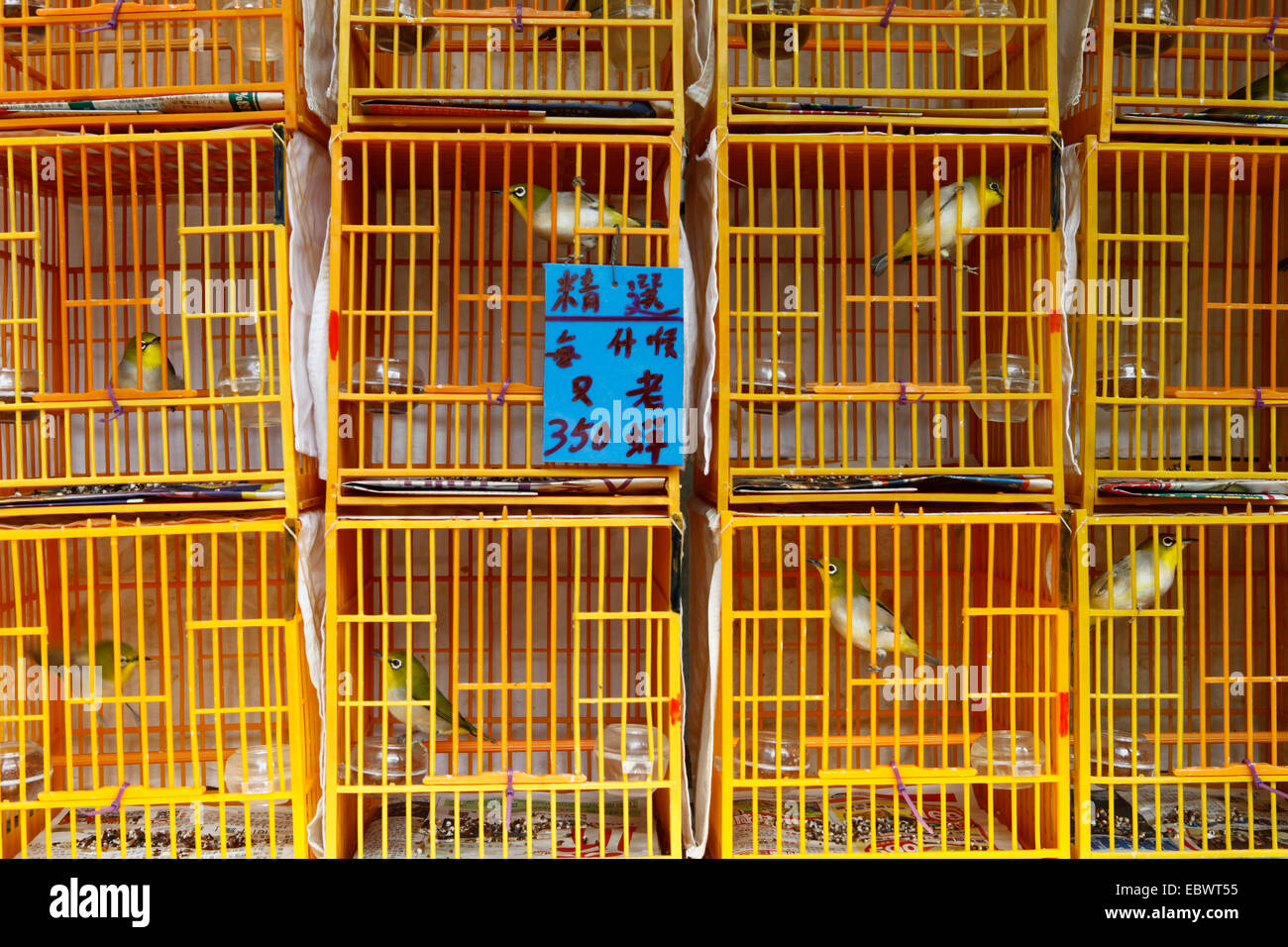 Exotic songbirds in cages at the bird market of Hong Kong, Hong Kong, Hong Kong, China, People's Republic of - Stock Image