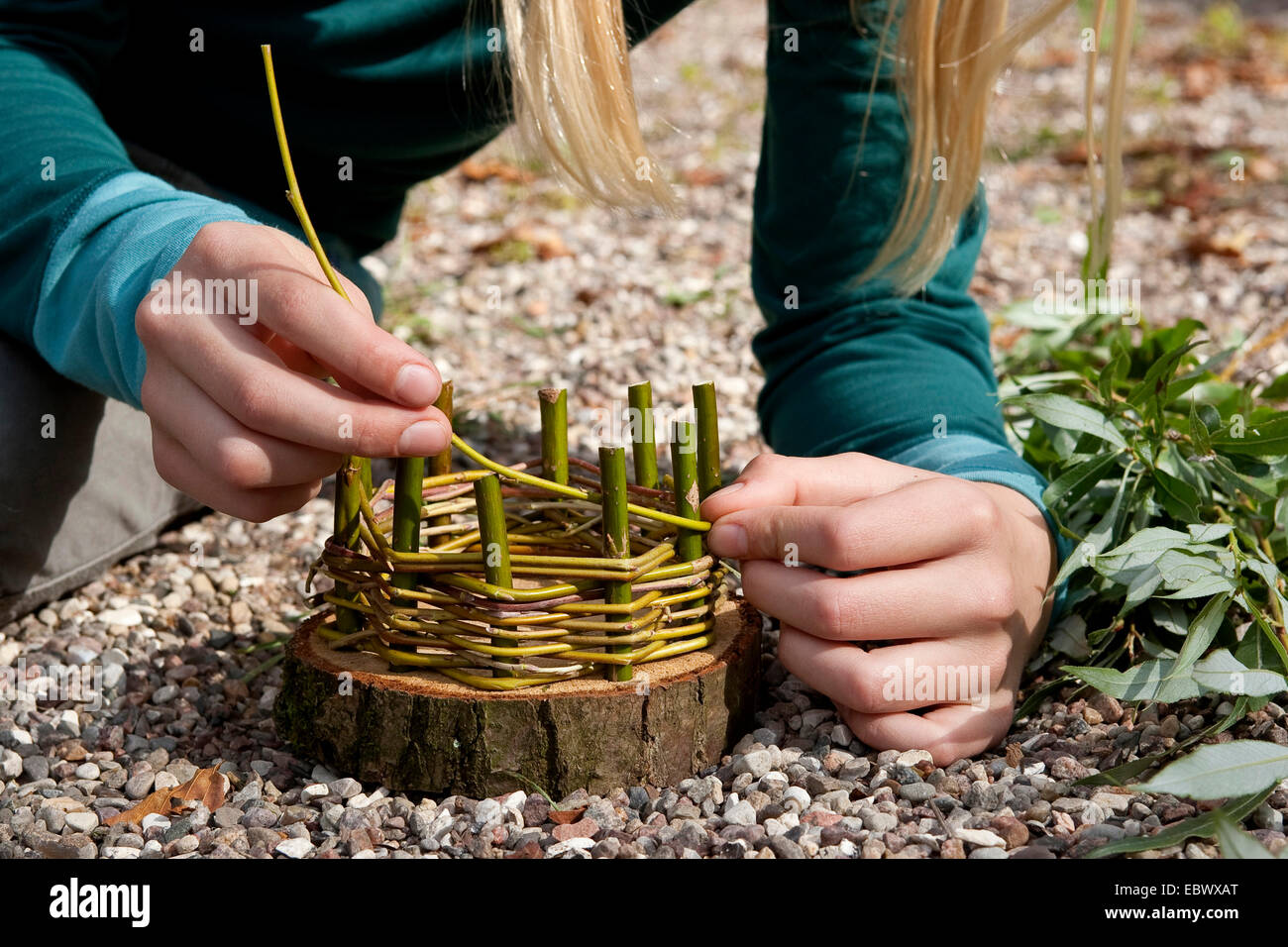 girl building an Easter basket from a tree disc, willow twigs, moss, daisies and coloured eggs; 3. step: weaving Stock Photo