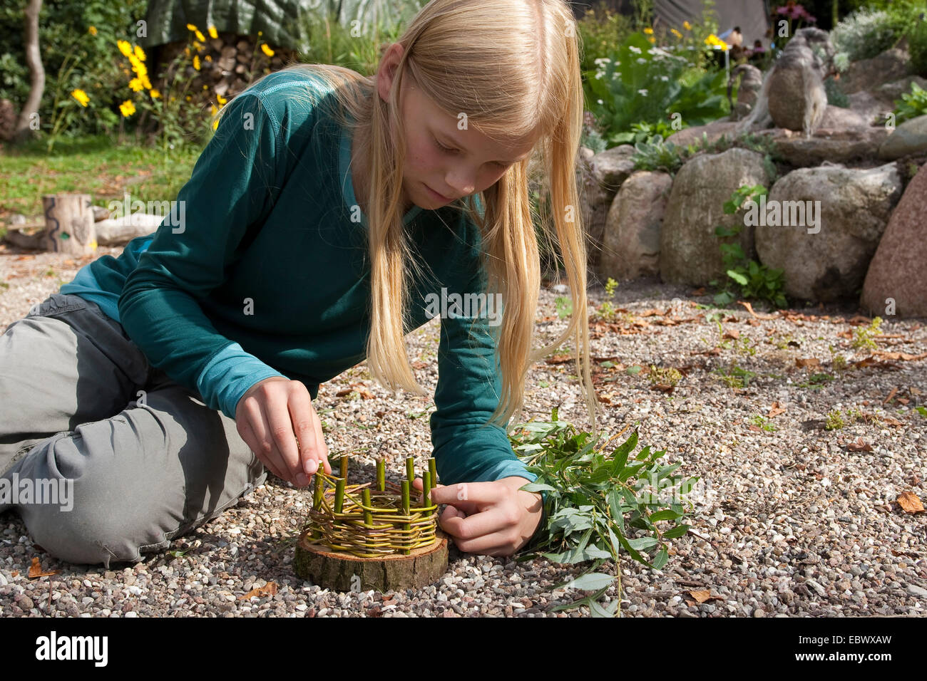 girl building an Easter basket from a tree disc, willow twigs, moss, daisies and coloured eggs; 3. step: weaving - Stock Image