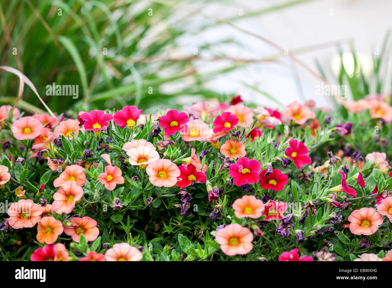 Roof top gardens potted plants in an urban setting - Stock Image