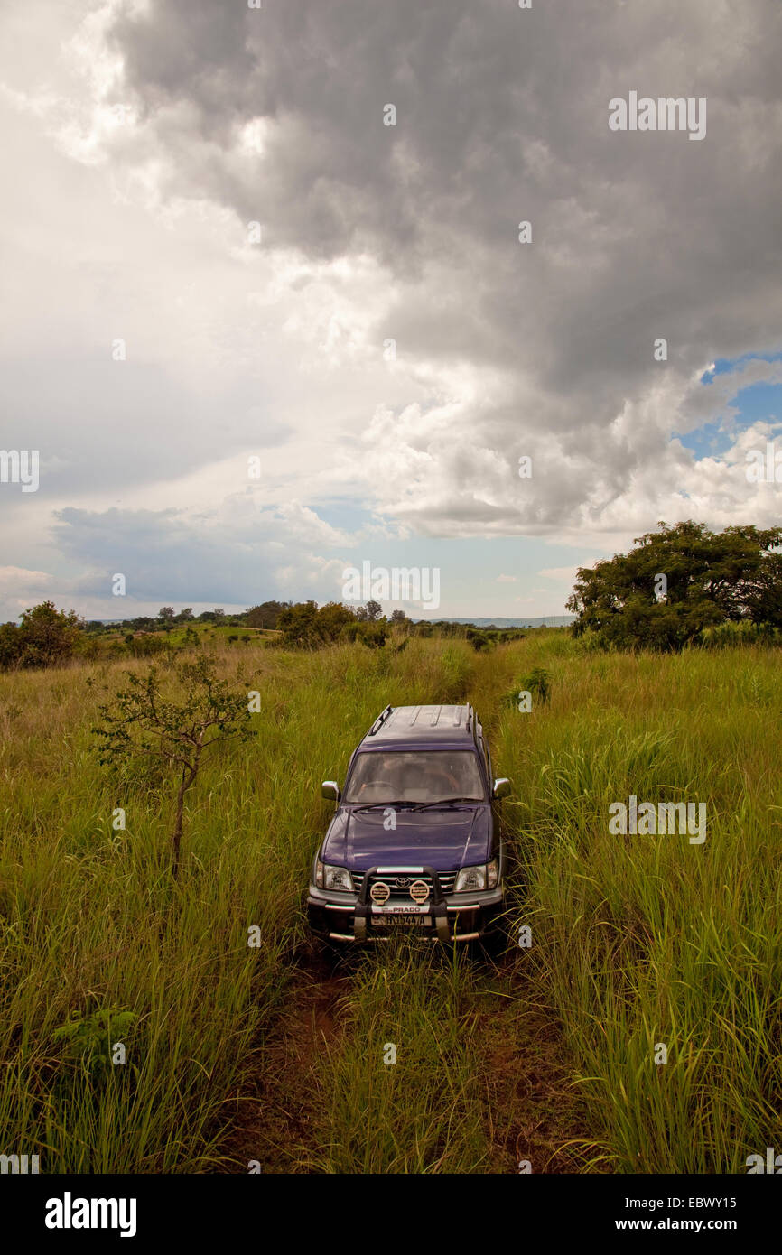 four by four vehicle is driving through tall grass in the 'Parc de la Ruvubu' in the east of the country, - Stock Image