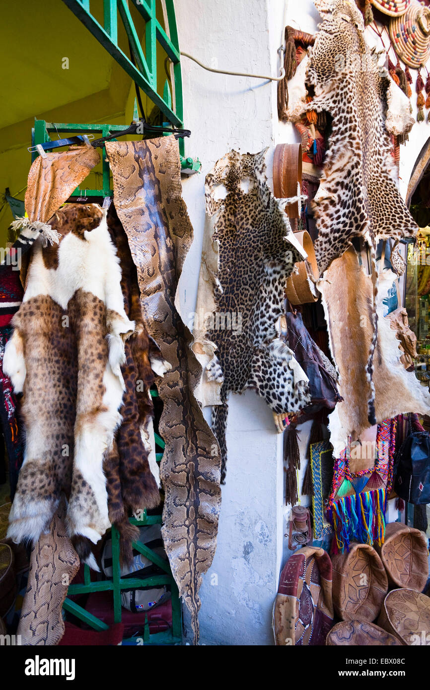shop in the Medina (old town) offering different animal's skins and furs, Libya, Tripolis Stock Photo