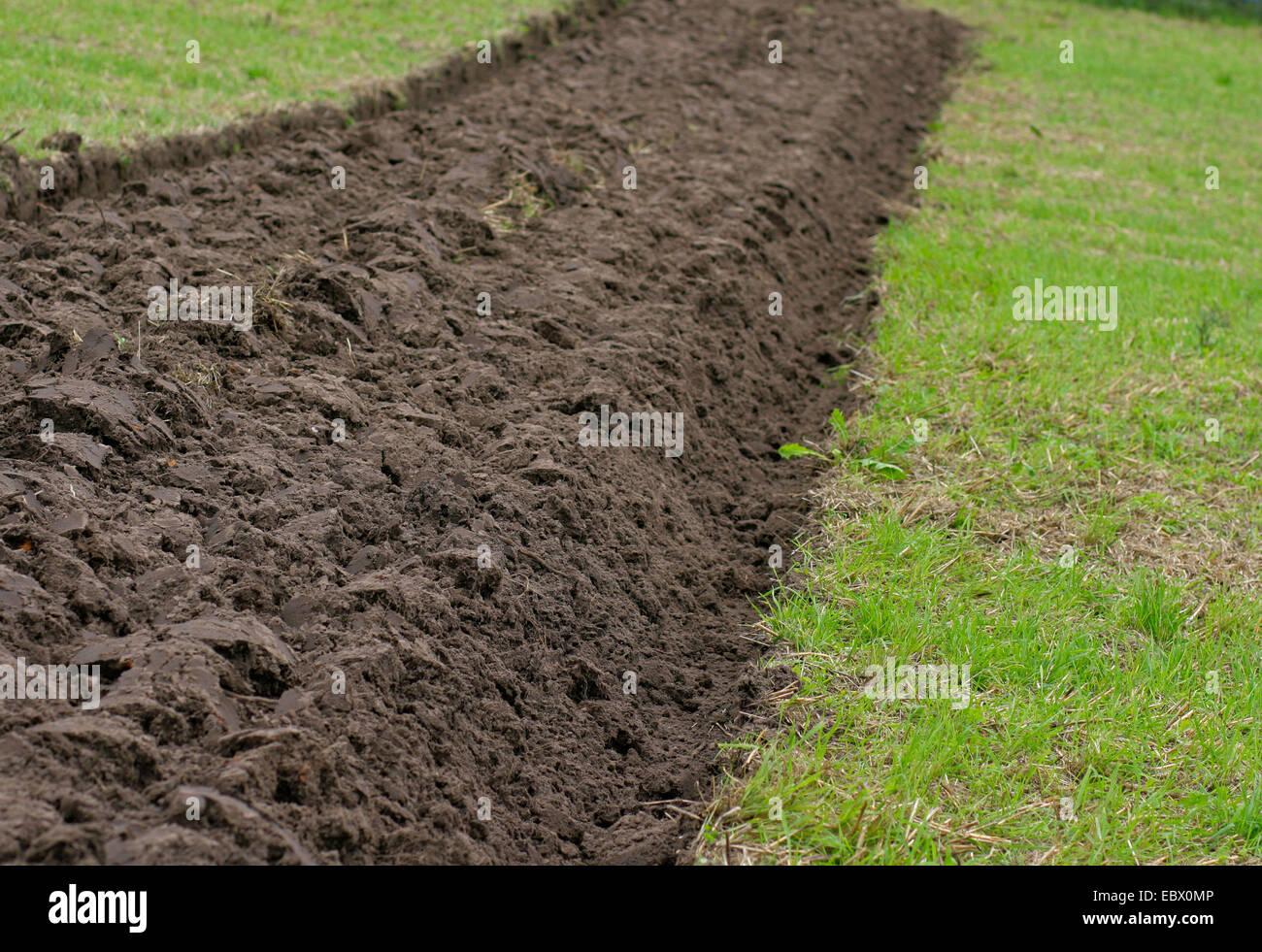 plowed field, Germany, Brandenburg, Bad Freienwalde - Stock Image