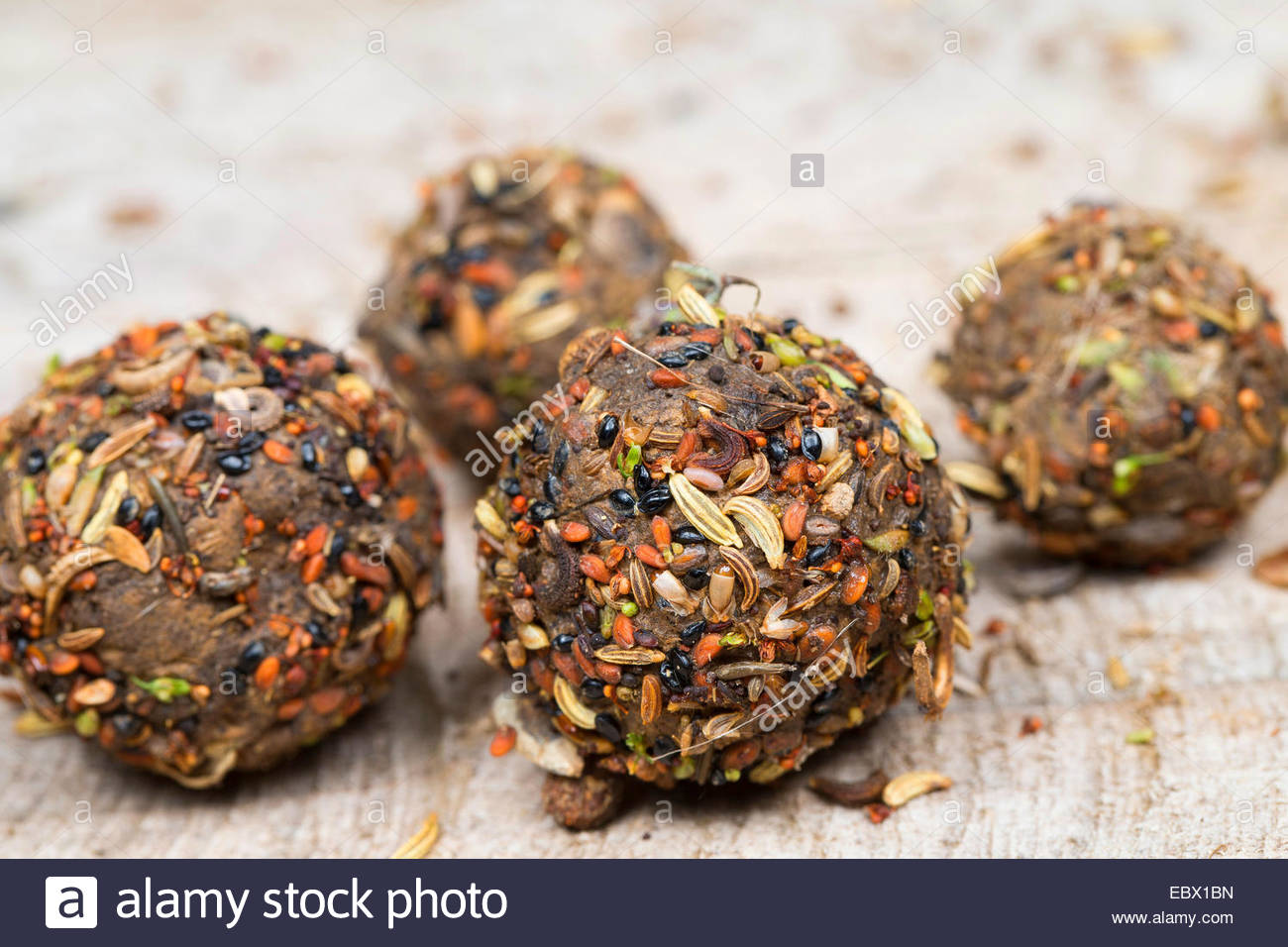 seed bombs with different seeds and fruits and soil, Germany - Stock Image