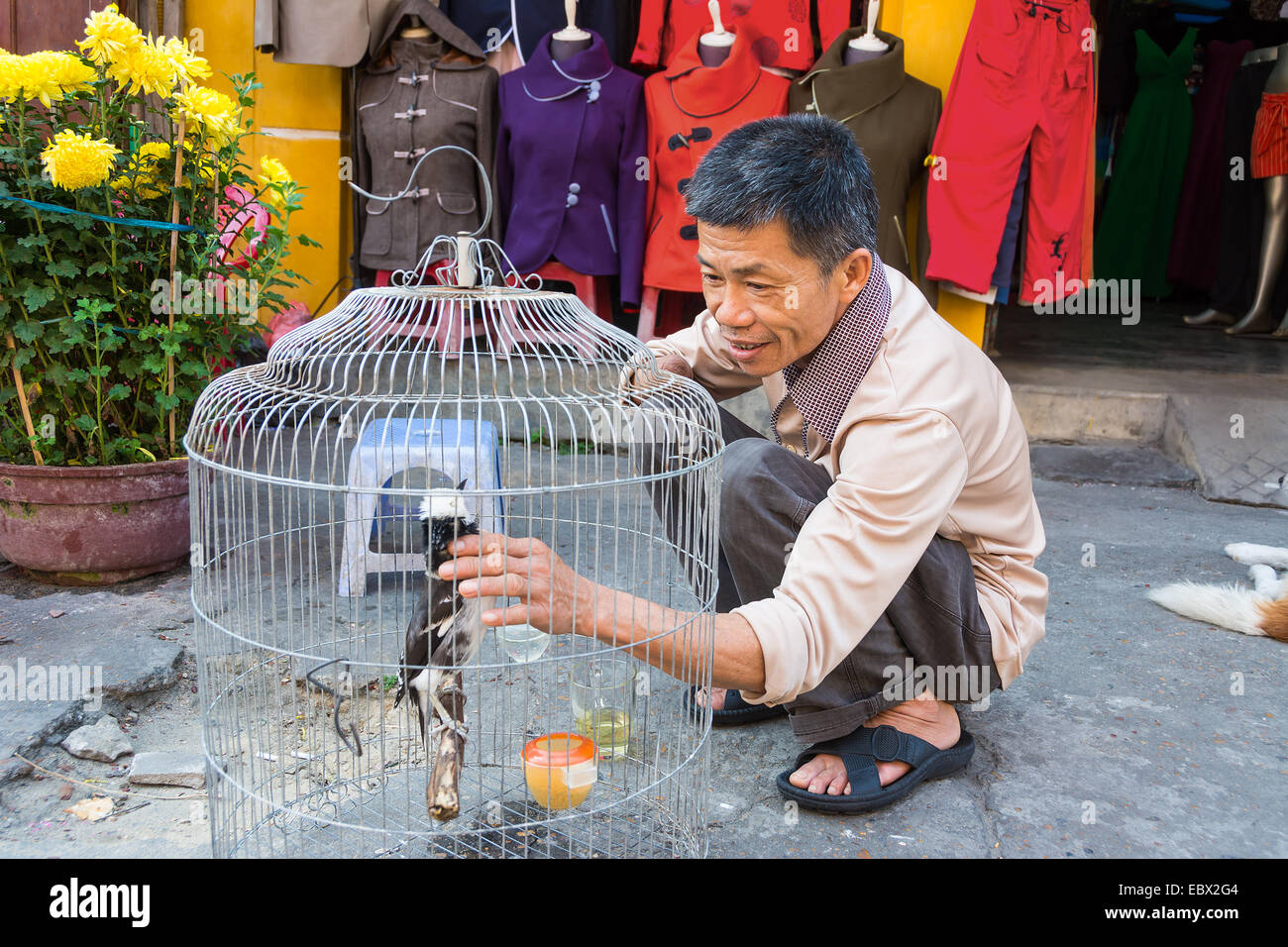 Disabled amputee man feeding caged bird in Hoi An Vietnam - Stock Image