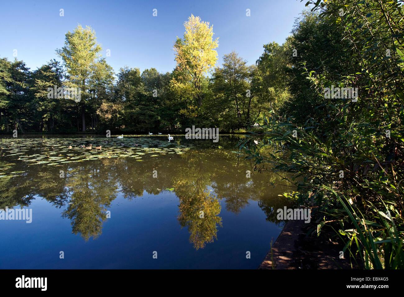 pond Muehlenteich in Schermbeck, Germany, North Rhine-Westphalia, Ruhr Area, Schermbeck - Stock Image