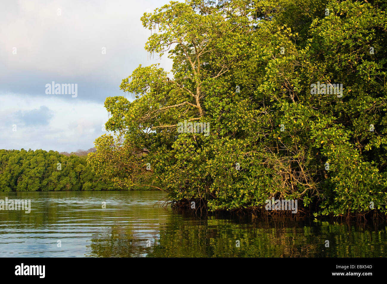 mangroves in the Austin Strait, India, Andaman Islands - Stock Image