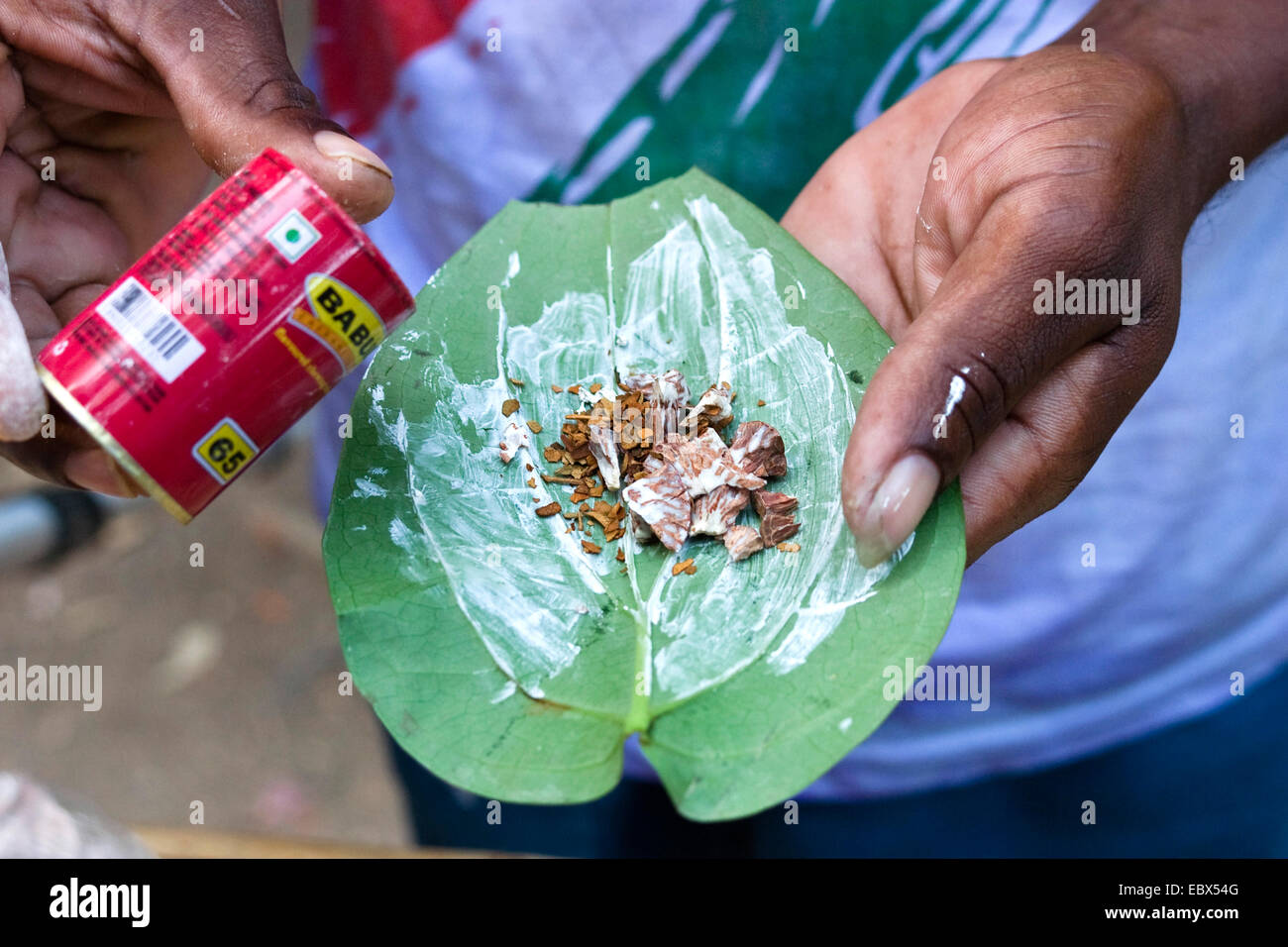 betel palm (Areca catechu), betelnut, Areca catechu; with quicklime on betelpepper leaf Piper betle, India, Andaman - Stock Image