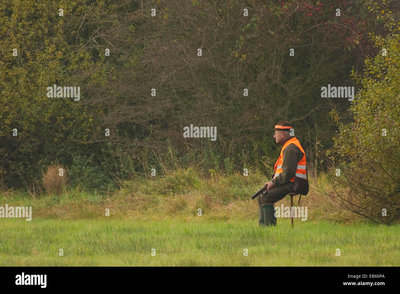 shooter sitting and waiting on a stool in a meadow during a battue in October, Germany - Stock Image