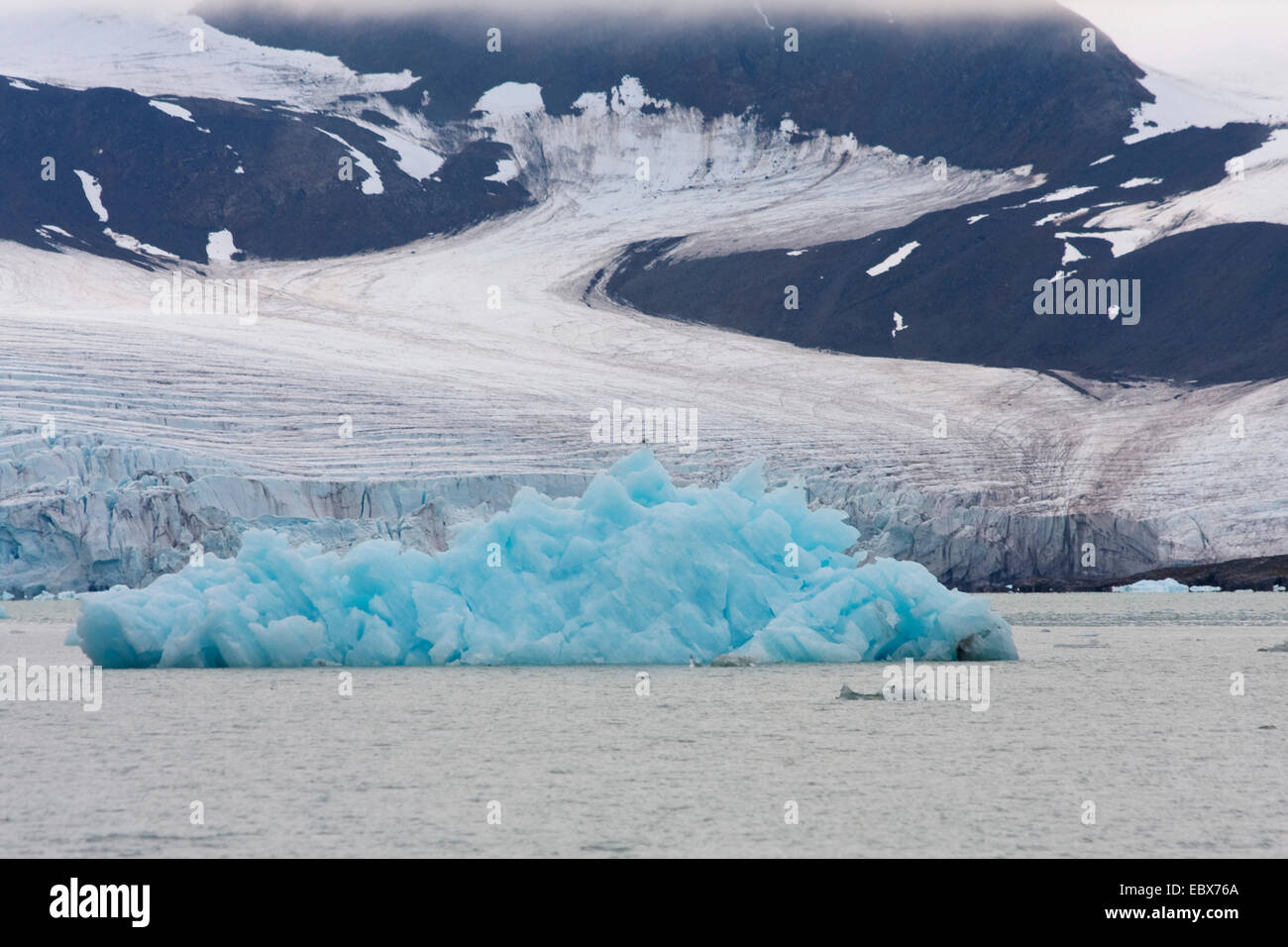 blue shimmering iceberg in the water in front of glacier, Norway, Svalbard, Llliehoeoekbreen - Stock Image