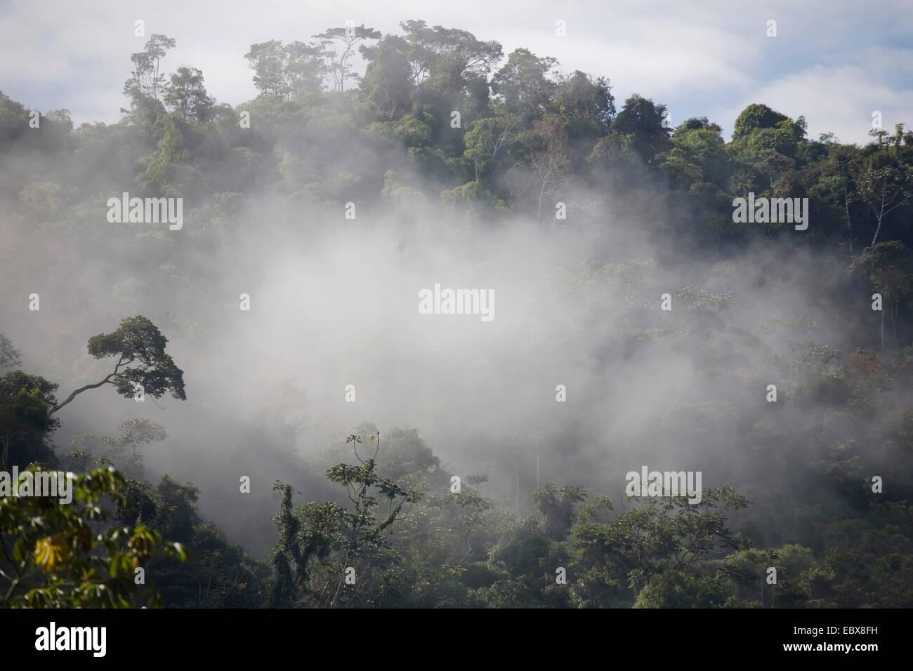 cloud forest, Peru, Manu National Park, Pilcopata - Stock Image