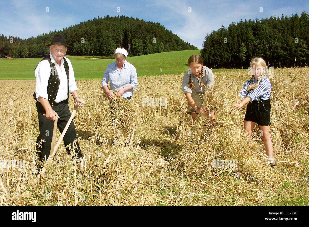 peasant family harvesting grain - Stock Image