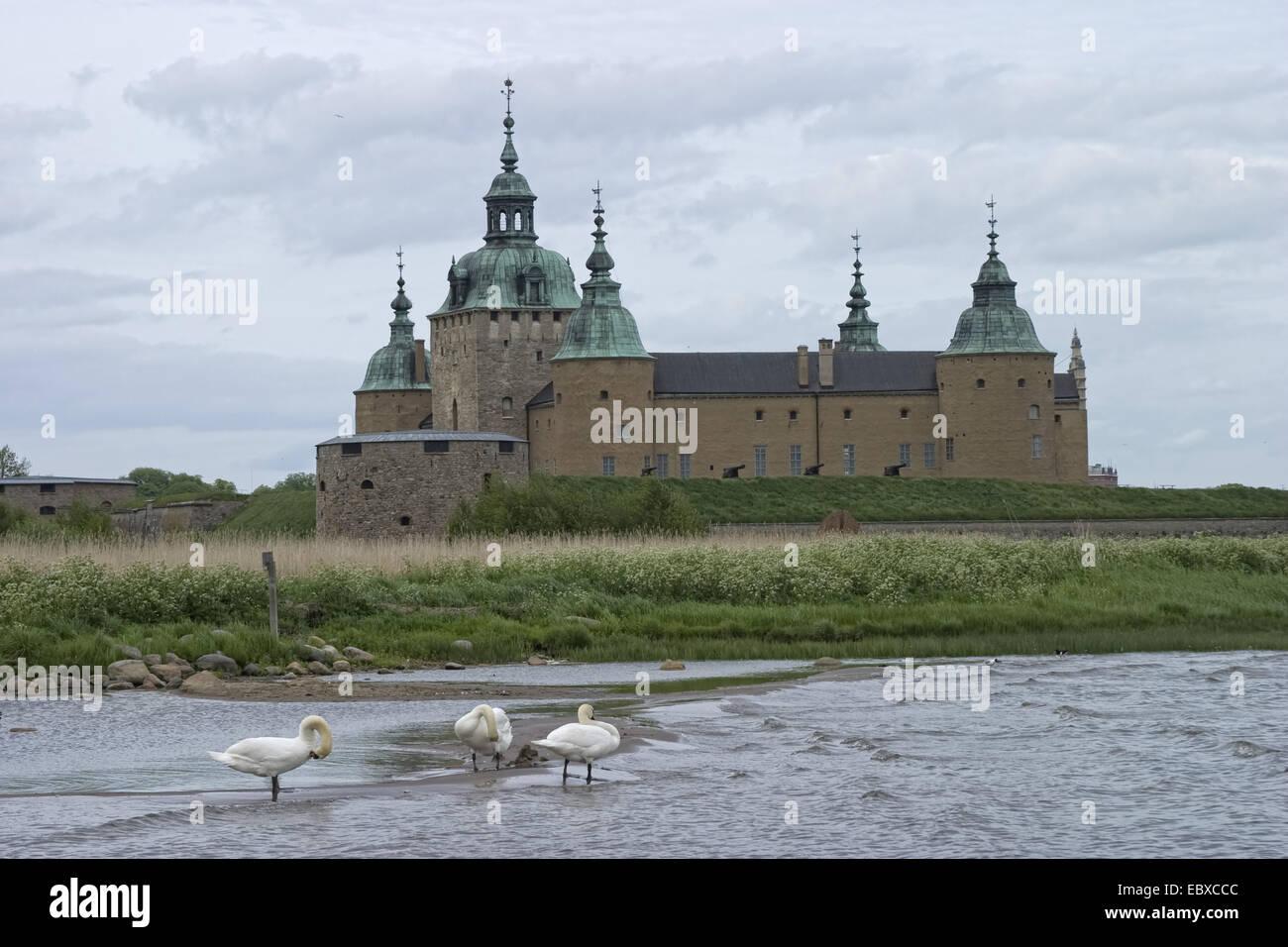 mute swan (Cygnus olor), Kalmar Castle, Sweden, Kalmar - Stock Image